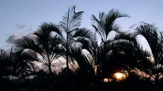 Sunset Cancun Palm Trees
