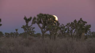 Sunset Moon Rising Joshua Tree