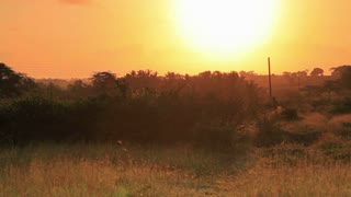 Sunset Over a Field in Kenya