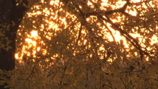 Sunset Through Leaves 3