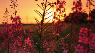 Sunset Through Some Flowers 2