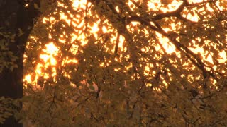 Sunset Through The Leaves 2