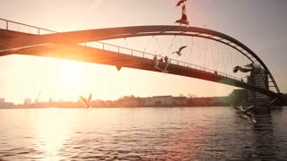 swarm of birds. beautiful romantic sunset. bridge panorama. sun sun flare