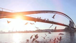 swarm of birds. seagulls. romantic sunset. bridge. lake pond water. slow motion