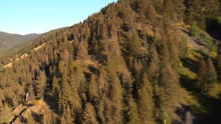 Tall Green Tree Mountains 2