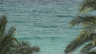 Teal Ocean Water Seen Through Palm Leaves