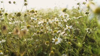 tee flowers slow motion nature field