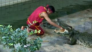 Thailand Tame Crocodile