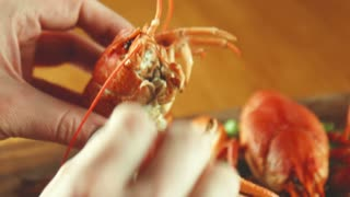 The female eats a lobster or cancer od crayfish using flat-nose pliers