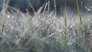 The female hand touches to a frosty grass on a background light of the sun