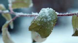 the first snow falls on leaves on a tree