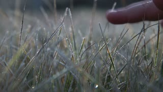 The kid hand touches to a frosty grass on a background light of the morning sun