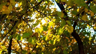 The sun through yellow leaves