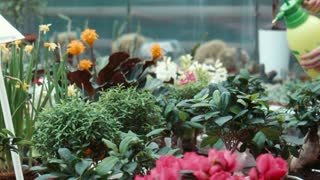 The woman irrigates flowers in the greenhouse
