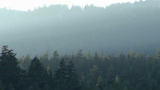 Thick Fog Over Forest