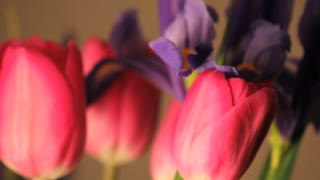 Three Spinning Pink Tulips and a Purple Flower