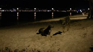 Three stray dogs in the beach by night with one digging a hole in the sand
