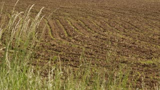 Tilled Farm Soil
