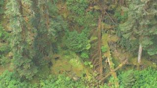 Tilt Up Dense Sunny Forest