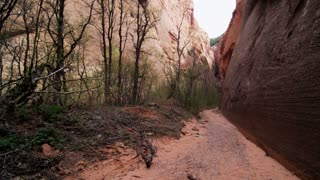 Tilt Up From Trail to Sky in Zion Canyon