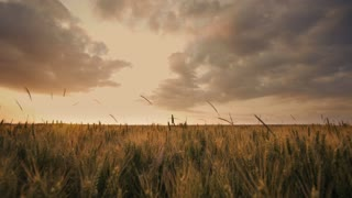 time lapse cornfield agriculture