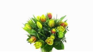 Time-lapse of growing, opening and rotating multicolor tulips bouquet in a vase 7x2 in 4K format on white background