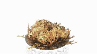 Time-lapse of opening Rose of Jericho (Resurrection Plant or false Anastatica hierochuntica) with hidden LOVE word inside 11x2 in 4K isolated on white background. In some countries there is tradition to put a surprise inside the Rose as a gift