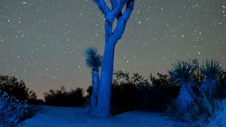 Timelapse Stars Spinning Over Joshua Tree