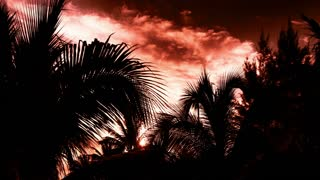 Timelapse Sunlight Palms
