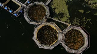 top view of fish farm