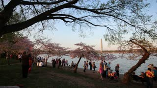 Tourists and Cherry Blossoms at Potomac River Dusk