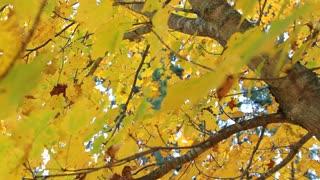 Track Back Underneath Autumn Tree
