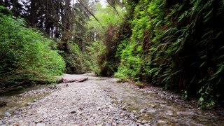 Tracking Shot Across Stream in Fern Canyon