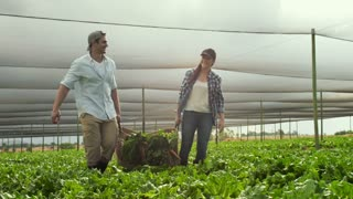 Young farming couple carrying basket full of produce in greenhouse on there vegetable farm.