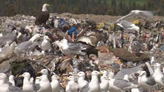 Trash Seagulls