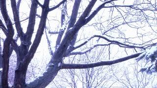 Tree In Winter Storm