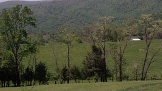 Tree Line Over Hills