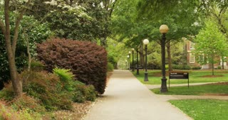 Tree-Lined Path on College Campus