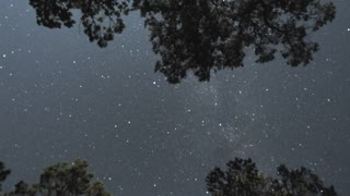 Tree Top Starry Night Sky Timelapse