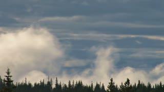 Treeline Clouds