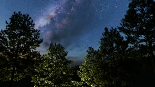 trees and Milky Way stars at night. Elements of this image furnished by NASA