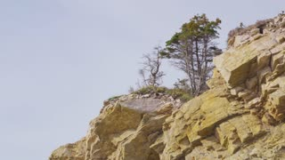 Trees Atop Rocky Cliffs in Nova Scotia