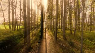 trees in forest. woods. mystical forest. green nature background
