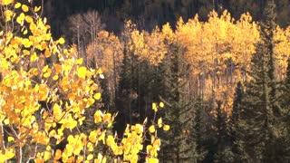 Trees of Aspen 2