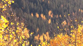 Trees of Aspen