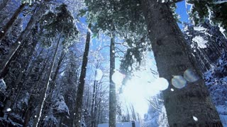 tress woods forest. snow winter nature. sun flare. light
