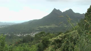 Tropical Hawaiian Plants and Valley