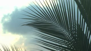 Tropical Leaves And Sky
