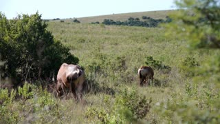 Two hartebeests in Addo Elephant National Park South Africa