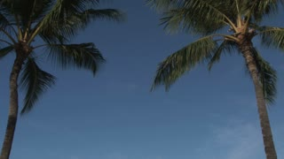 Two Palm Trees in the Clear Blue Sky